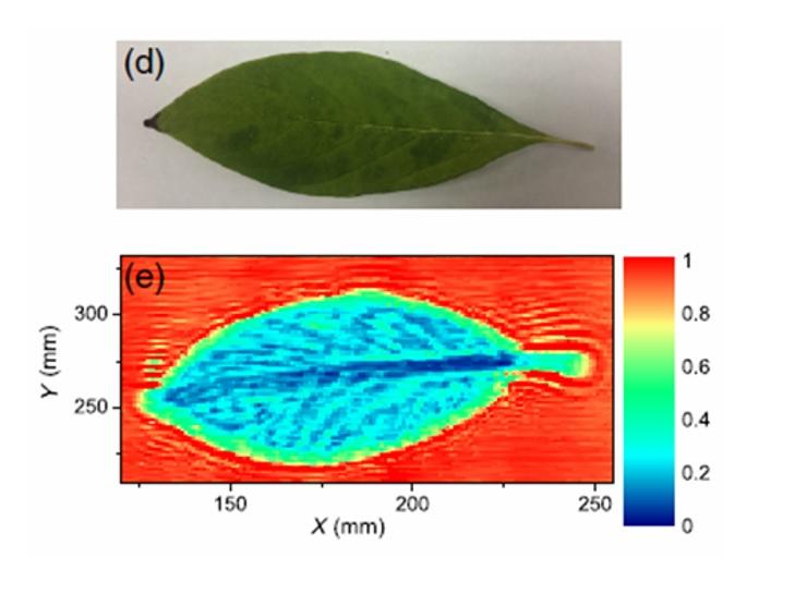 Вышла наша новая публикация, посвященная анализу содержания и распределения воды в растениях